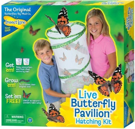 735569010701, 735569018851 Insect Lore Giant Butterfly Garden